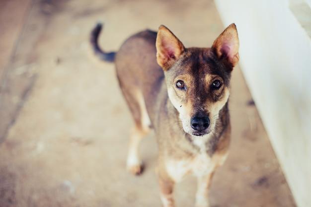 Weichzeichnung ein streunender hund, allein das leben, das auf nahrung wartet. verlassener obdachloser streunender hund liegt auf der straße. kleiner trauriger verlassener hund auf fußweg.