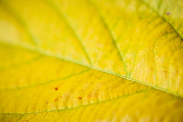 Weichzeichnung von grün und gelb verlassen beschaffenheit