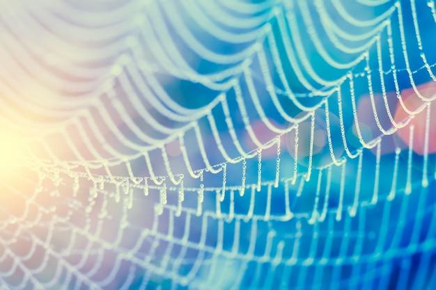 Weichzeichnung von tropfen des taus auf spinnenwelle am morgen