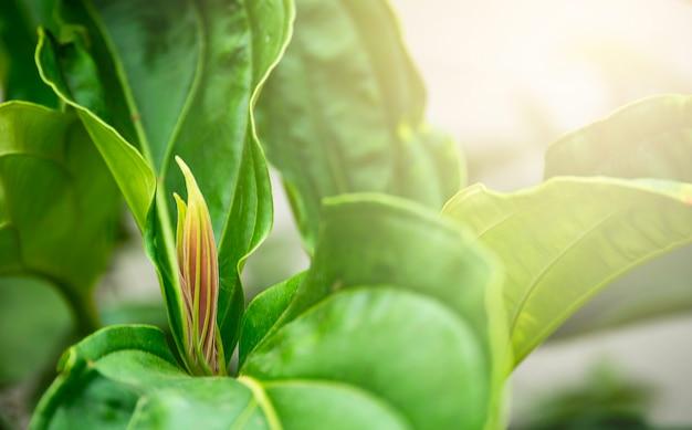 Weichzeichnungsnahaufnahmenatur des grünen blattes mit sonnenlicht im garten