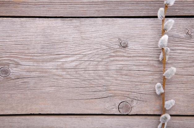 Weidenkätzchen auf einem grauen hölzernen hintergrund mit kopienraum, ostern