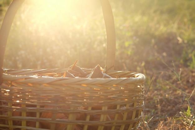 Weidenkorb auf bananen mit hintergrundbeleuchtung des klebrigen reises (khao tom mat oder khao tom pad) während des sonnenuntergangs.