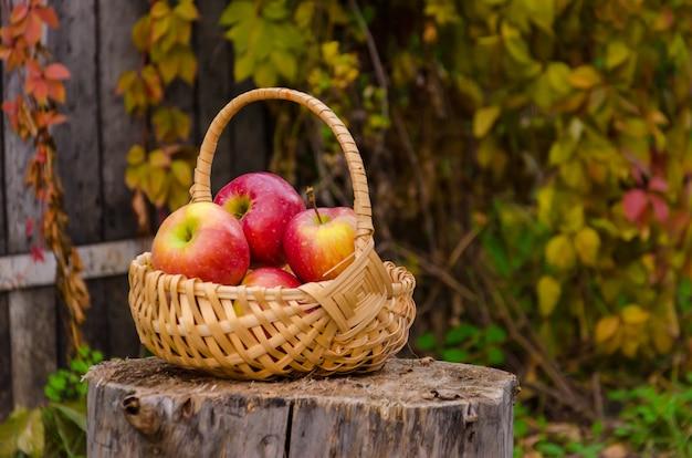 Weidenkorb aus holz mit roten saftigen äpfeln auf stumpf gegen einen alten zaun mit wilden trauben