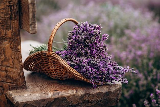 Weidenkorb mit frisch geschnittenen lavendelblüten auf einer natürlichen holzbank inmitten eines feldes von lavendelbüschen. das konzept von spa, aromatherapie, kosmetologie. weicher selektiver fokus.