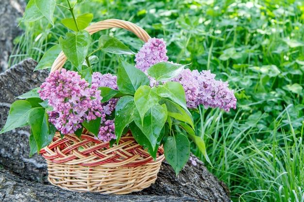 Weidenkorb mit lila blumen am stamm eines umgestürzten baumes mit grünem gras im hintergrund