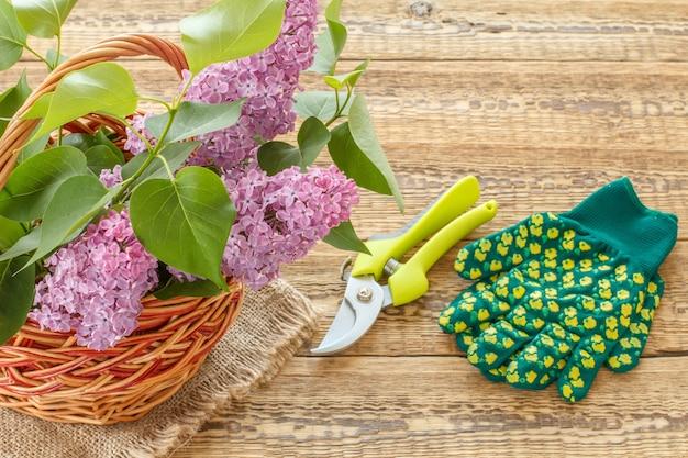 Weidenkorb mit lila blumen, gartenschere und gartenhandschuhen auf holzbrettern. draufsicht mit kopienraum.