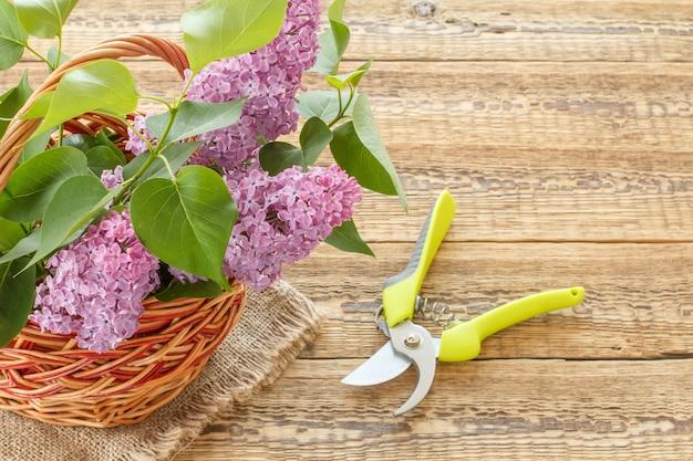 Weidenkorb mit lila blumen und einer gartenschere auf holzbrettern.