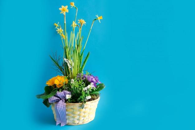 Weidenkorb mit verschiedenfarbigen blüten, primeln und narzissen.