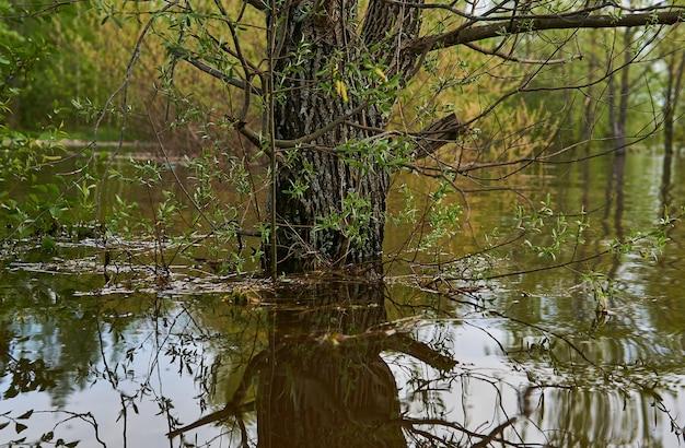 Weidenstamm im wasser während der frühjahrsflut