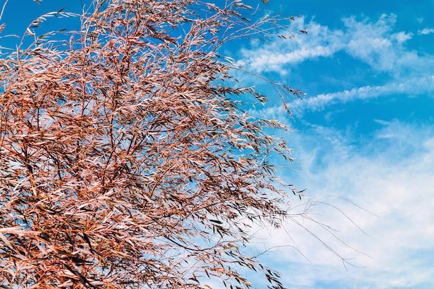 Weidenzweige entwickeln sich unter dem einfluss eines starken windes. federn im himmel ähneln federn