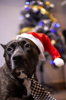 Weihnachten zu hause mit dem hund