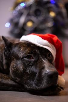 Weihnachten zu hause mit den hunden