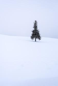 Weihnachtsbaum bedeckt mit schnee für hintergrund.