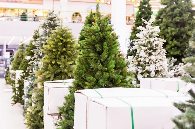 Weihnachtsbaum im shop. ausstellungsraum der bäume des neuen jahres. fichten in der halle