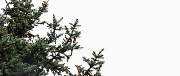 Weihnachtsbaum mit zapfen auf einem platz für ihr textbanner