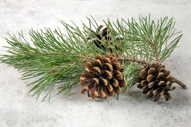 Weihnachtsbaumast und kegel