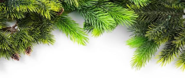Weihnachtsbaumzweig auf weißem hintergrund