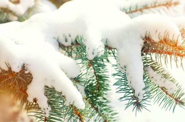 Weihnachtsbaumzweige. weihnachtsbaum im schnee an einem sonnigen