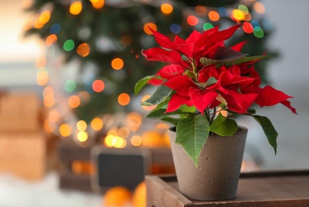 Weihnachtsblumen-weihnachtsstern auf holztisch im zimmer