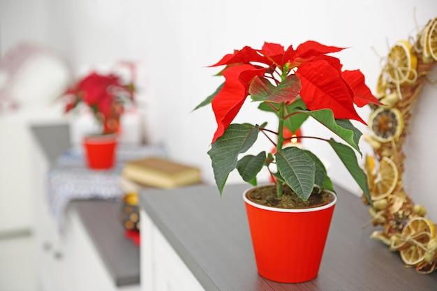 Weihnachtsblumen weihnachtsstern und dekorationen im regal mit weihnachtsschmuck
