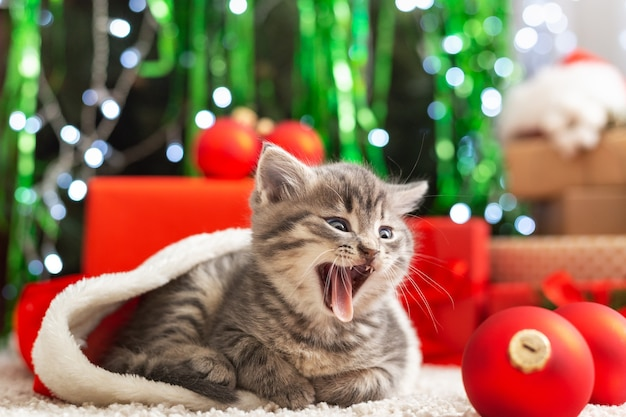 Weihnachtsgeschenke konzept. weihnachtskatze mit lustigem gesicht im weihnachtsmann-hut, der geschenkbox unter weihnachtsbaum hält. entzückendes kleines tabbykätzchen, kätzchen, katze. gemütliches zuhause. nahaufnahme, platz kopieren.