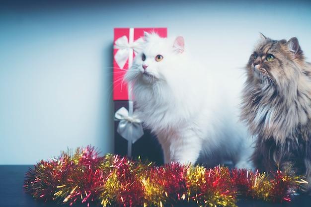 Weihnachtsgeschenke mit persischen katzen, weinlesefilterbild