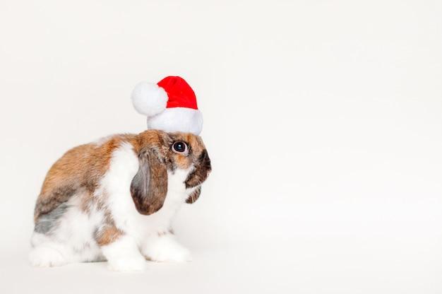 Weihnachtshase in nikolausmütze