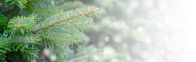 Weihnachtshintergrund mit schneebedeckten zweigen