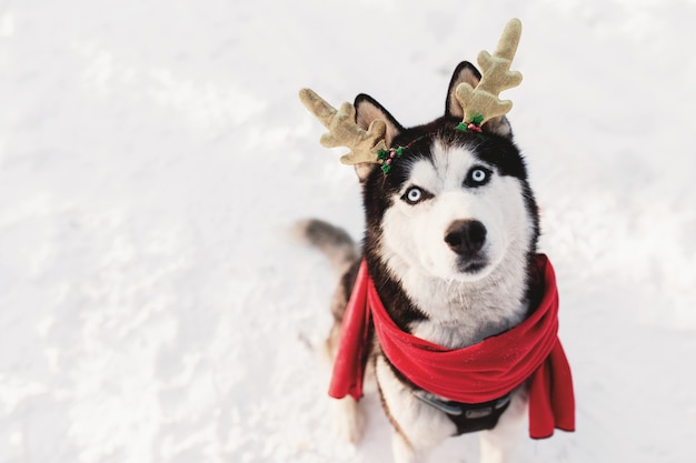 Weihnachtshusky-hund in rotem schal hirschhörner weihnachtsmann-kleidung im verschneiten wald