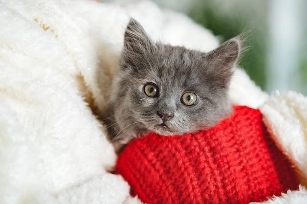 Weihnachtskätzchen aus rotem strickmaterial