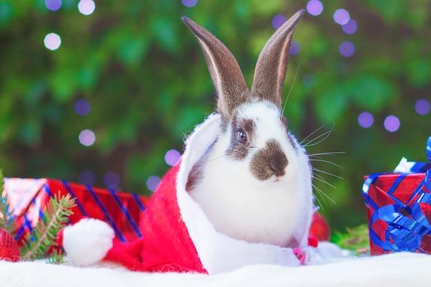 Weihnachtskarte mit haustier. kleines niedliches babykaninchen, das in geschenkbox auf neujahr, weihnachten sitzt.