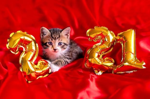 Weihnachtskatze 2021. kätzchen mit goldfolienballons nummer 2021 neujahr. gestreiftes kätzchen auf festlichem rotem hintergrund des weihnachtsfestes.