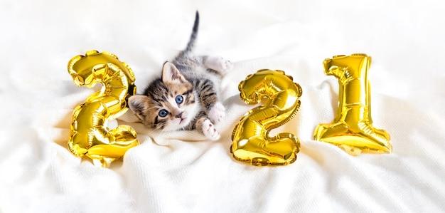 Weihnachtskatze 2021. kätzchen mit goldfolienballons nummer 2021 neujahr. gestreiftes kätzchen auf festlichem weißem hintergrund des weihnachtsfestes.