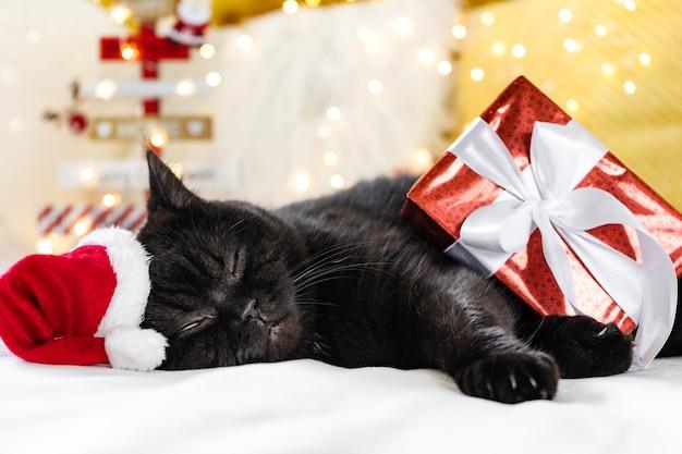Weihnachtskatze, die mit einer geschenkbox schläft