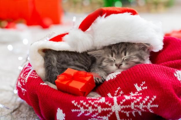 Weihnachtskatze, die weihnachtsmannmütze hält geschenkbox, die auf plaid unter weihnachtsbaum schläft