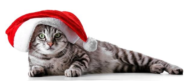 Weihnachtskatze isoliert auf weiß