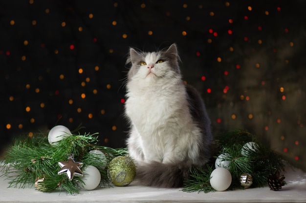 Weihnachtskatze liegt auf einer holzoberfläche mit weihnachtsspielzeug und girlanden