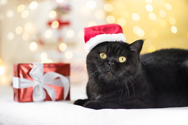 Weihnachtskatze mit einer geschenkbox