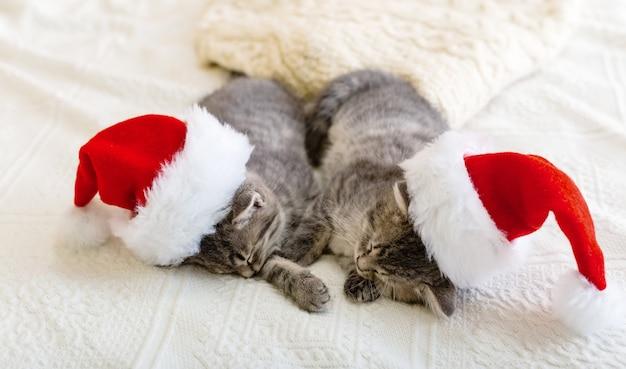 Weihnachtskatzen. nette tabbykätzchen, die zusammen in weihnachtsmützen schlafen. weihnachtsmann-hüte auf hübscher babykatze. kindertierkätzchen und gemütliches wohnkonzept. haustiere zu neujahr und weihnachten.