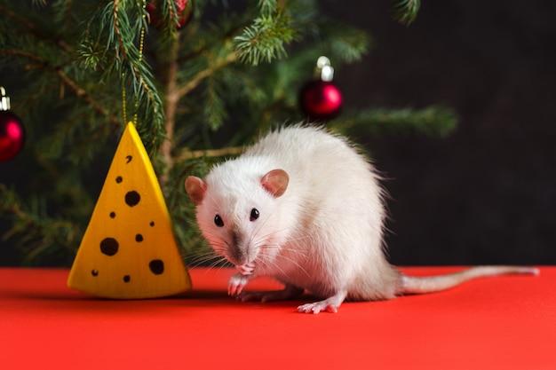 Weihnachtskomposition mit einer echten ratte. eine ratte nahe einem weihnachtsbaum mit spielwaren und künstlichem käse.