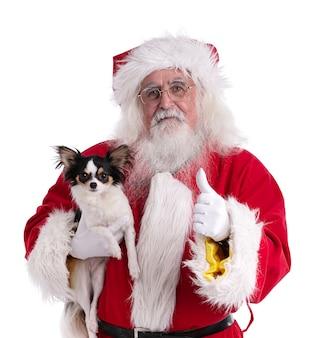 Weihnachtsmann mit einem chihuahua in den händen an einer weißen wand