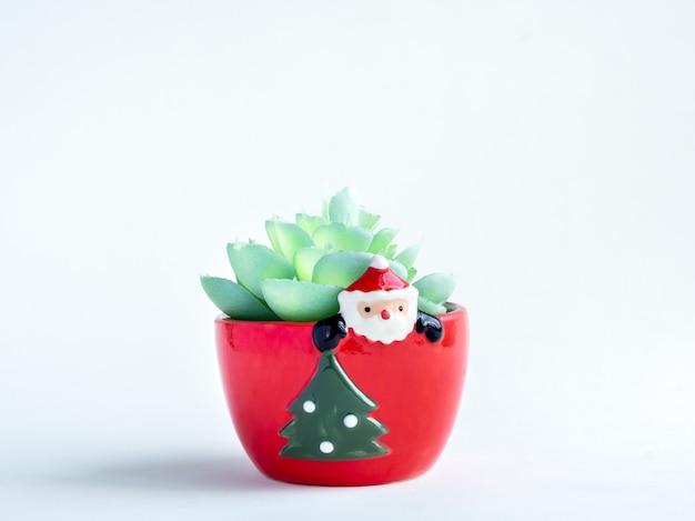 Weihnachtsobjektkonzept, grüne sukkulentenpflanze im roten niedlichen weihnachtsmann-pflanzentopf mit weihnachtsbaum