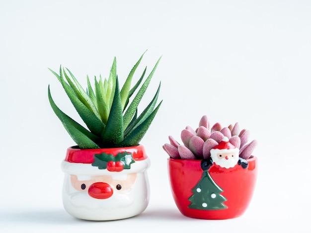 Weihnachtsobjektkonzept, grüne und rosa sukkulenten in niedlichen weihnachtsmannkeramiktöpfen lokalisiert