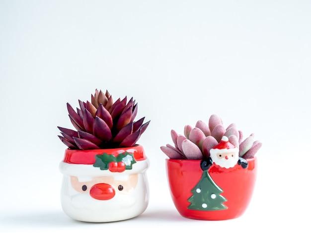 Weihnachtsobjektkonzept, rosa und rote sukkulenten in niedlichen weihnachtsmannkeramiktöpfen lokalisiert