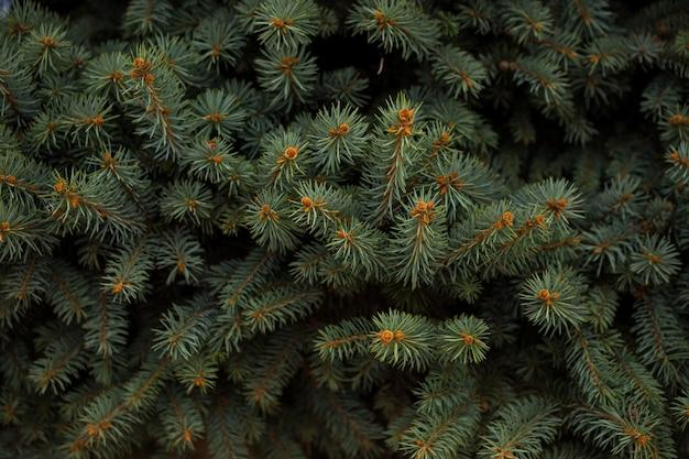 Weihnachtsrahmen auf dem hintergrund des weihnachtsbaums, thema des neuen jahres. hintergrundbild für ihr gerät
