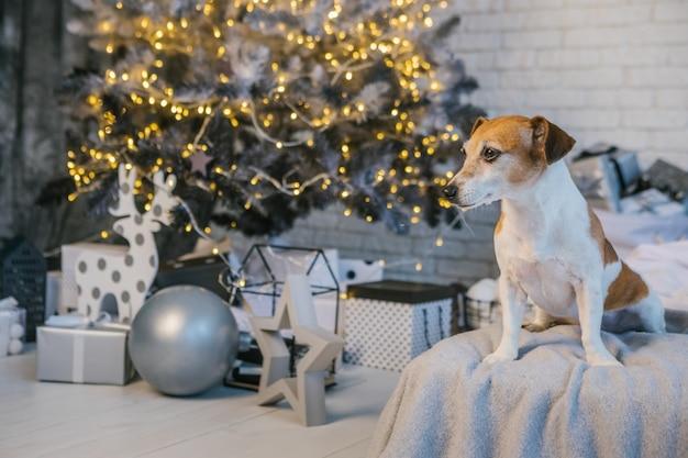 Weihnachtsstimmunghund, der auf dem bett auf der gemütlichen bedroon dekoration des hintergrundes sitzt