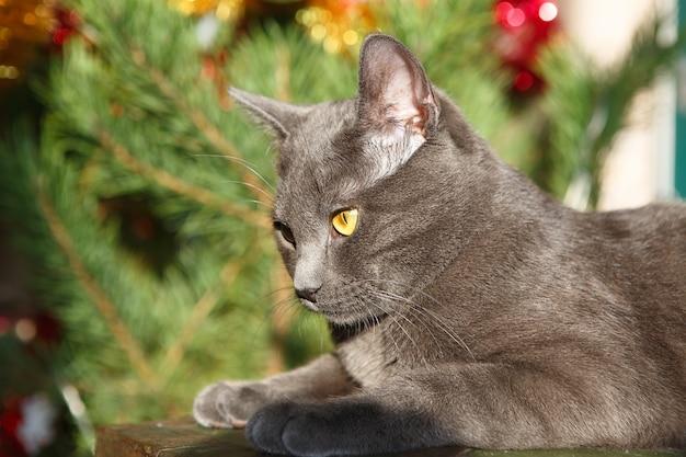 Weihnachtszeit, neujahr, feiertage und feiern. katze sitzt zu hause. freches süßes kätzchen.