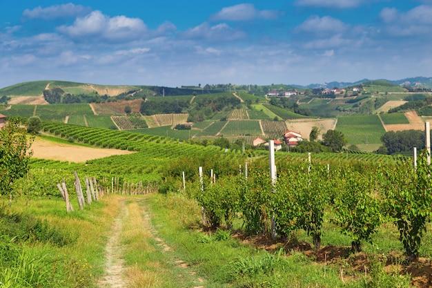 Weinbau in italien, piemont.
