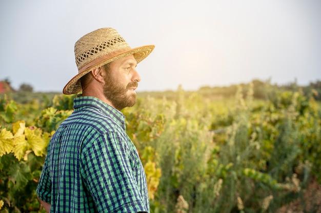 Weinbauer betrachtet sein feld bei der weinlese