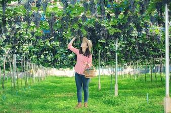 Weinbergbauern, die lächeln und die Ernte genießen.